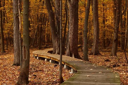fall-1432252_1280.jpg